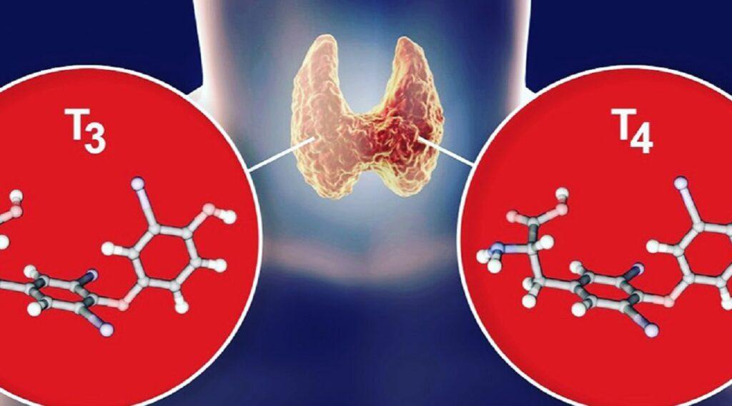 hormoni stitne žlezde