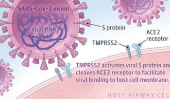 koronavirus i s protein